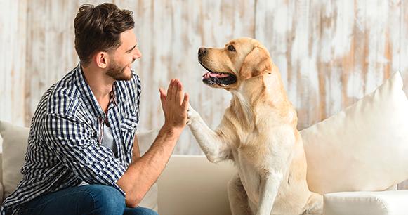 Cuida la salud de tu mascota